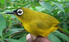 tropical bird에 대한 이미지 검색결과