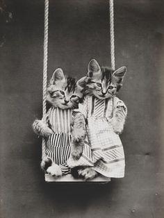 Victorian photographer Harry Whittier Freespioneered Lolcats a century ago - Telegraph