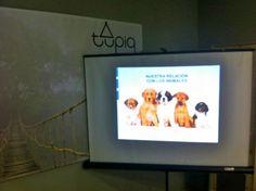 Conferencia sobre Ética animal