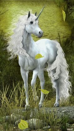 Unicorn And Fairies, Unicorn Fantasy, Real Unicorn, Unicorns And Mermaids, Unicorn Art, Magical Unicorn, Fantasy Creatures, Mythical Creatures, Unicorn Backgrounds