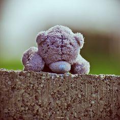 Teddy bear by Róbert Mačej on 500px