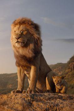 Bande-annonce Disney King Action Lion King avec Simba - Disney Live Action Lion King Trailer With Simba, # King - Watch The Lion King, Lion King Movie, Lion King Art, Film Lion, Lion King Poster, Art Roi Lion, Lion Art, Roi Lion Simba, Lion King Simba