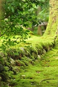 Moss and Natural Textures. #woodland #moss