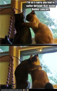 This was most likely a cat fight, caught very fast to look like they were hugging, just sayin'.