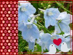 Viel Spaß mit den Bildern. Sie finden auf dieser Seite lizenzfreie, weil von mir selbst fotografierte und verschönerte Bilder, kostenlos zum Download. http://kostenlose-fotos-bilder-sprueche-legakulie.de/ #beautiful #wow #nice #nature #picture #flowerpicture