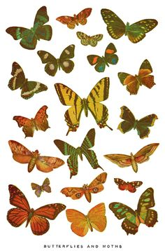 1937 butterflies and moths printable.  To go with the ones from Martha, the ones from Ikea, and the ones I made for our bathroom. For when it´s finally spring.
