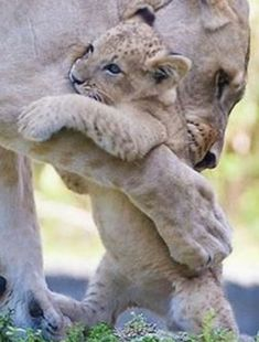HUG FROM MOM!