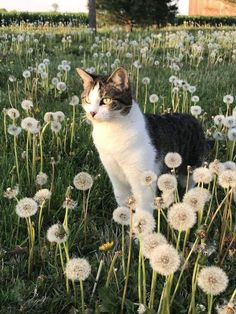 I ღ Cats. A kitten is a juvenile cat. After being born, kittens are totally dependent on their mother for survival and they do not normally. Pretty Cats, Beautiful Cats, Animals Beautiful, Beautiful Creatures, I Love Cats, Cool Cats, Crazy Cats, Cute Baby Animals, Animals And Pets