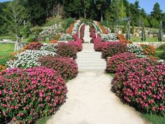 A variety of SunPatiens colors line a path in a Japanese garden.
