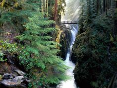 olympic national park | Olympic National Park, Washington