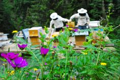 TURKEY - A New Project Taps into Honey's Tourism Potential.