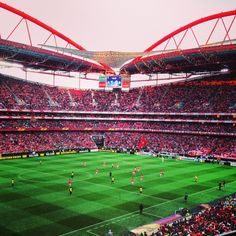 "See 4781 photos from 11078 visitors about carrega benfica, glorioso slb, and clube. ""As an American and lover of USA football, this experience was. Football Stadiums, Football Fans, Benfica Wallpaper, European Football, Best Player, My Passion, Four Square, Soccer, World"