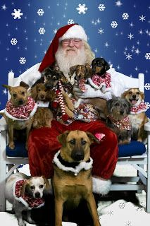 Green and Glassie: Barking Wednesday - Tasty Dog Treats for the Holidays