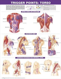 Trigger Points Set anatomy poster two posters show trigger point locations with primary and secondary pain sensitive zones of muscles.