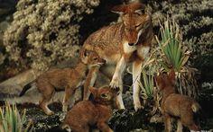 Animales National Geographic bebé Lobo ancha Resolución fondo de pantalla