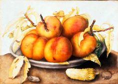 garzoni-peaches-and-a-cucumber.jpg (733×519)