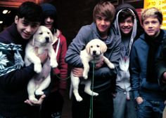 Find images and videos about one direction, niall horan and louis tomlinson on We Heart It - the app to get lost in what you love. Fetus One Direction, One Direction Humor, One Direction Pictures, I Love One Direction, Direction Quotes, Zayn Malik, Niall Horan, Liam Payne, Louis Tomlinson