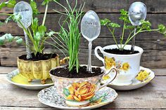 herbs in a cup