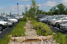 Grow Native -- Natives filter runoff and protect streams. Love to do something like this pic (minus the parking lot) for our side yard. grownative.org