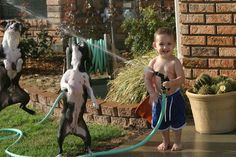 Funny Picture of a Kid Playing with the Hose and two Boston Terrier Dogs.  http://www.bterrier.com/funny-picture-of-a-kid-playing-with-the-hose/  Like Boston Terrier Dogs on Facebook : http://www.facebook.com/bterrierdogs