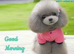 Good Morning Images for Puppy Lovers female cute dog