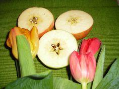 Andre fortellinger » fantasifantasten.no - inspirasjon til alle som jobber med barn Honeydew, Fruit