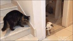 Tumblr: catsdogsblog: More Funny Cats here