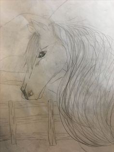 RQH Paisley one of my horses
