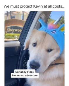 Cute Animal Memes, Animal Jokes, Cute Animal Videos, Cute Animal Pictures, Cute Funny Dogs, Funny Dog Memes, Funny Dog Videos, Cute Funny Animals, Cute Dogs And Puppies