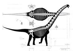 Futalognkosaurus recon by Paleo-King on DeviantArt