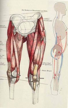 Exceptional Drawing The Human Figure Ideas. Staggering Drawing The Human Figure Ideas. Leg Anatomy, Anatomy Poses, Anatomy Art, Male Figure Drawing, Figure Drawing Reference, Anatomy Reference, Human Anatomy Drawing, Body Drawing, Life Drawing