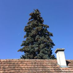 Seattle Skyline, Christmas Tree, Holiday Decor, Travel, Teal Christmas Tree, Viajes, Xmas Trees, Christmas Wood, Trips