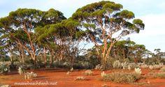 Nachteile Buschleben Australien