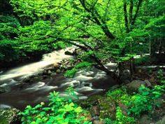 Tags beautiful nature Scenes World Landscape wallpapers World Landscape wallpapers Free Nature Scenes Wallpapers World Landscape wallpapers . Great Smoky Mountains, Smoky Mountains Tennessee, Beautiful Nature Scenes, Beautiful Landscapes, Beautiful Places, Scenic Wallpaper, Landscape Wallpaper, Mountain Pictures, Smoky Mountain National Park