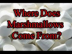 Where do Marshmallows come from? Visiting a Marshmallow Farm - RV Travel...