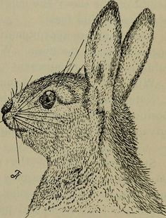 """Image from page 244 of """"Elementary lessons in zoölogy : a guide in studying animal life and structure in field and laboratory"""" (1896) 