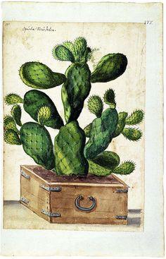 Camerarius Florilegium- ca 1589 on Flickr. The University Library of Erlangen-Nuremberg