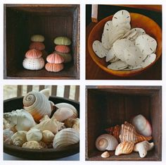 We are forever growing our collections. Each shell tells its own little story, who found it, when and where. And then arguments follow because everyone claims to have found the more handsome larger ones.