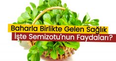Altın Süt – ZERDEÇAL SÜT KARIŞIMI — Organik Günler Green Beans, Herbs, Vegetables, Food, Floors, Vegetable Recipes, Eten, Herb, Veggie Food