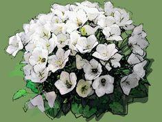 Campanula carpatica 'Alba' Puzzle, Plants, Puzzles, Riddles, Planters, Jigsaw Puzzles, Plant, Planting