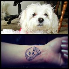 Dog portrait..