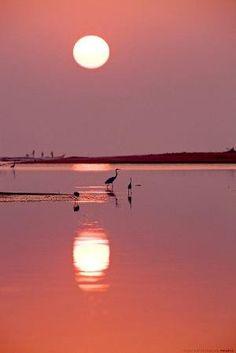 Pink Beach Moon*-*. by tamara