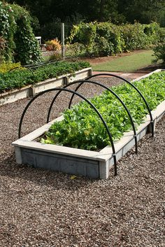 Lettuce in raised beds with hoops by Gardening in a Minute, via Flickr, I like the hoop guides fastened on the side of the boxes