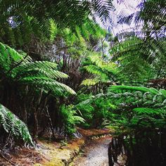 Had to find my way through jungle today...we will try to practice again tomorrow  #bayofislands #twiolinsontour #musicianslife #beautifulnewzealand #practiceOrCoffee #musicianlife