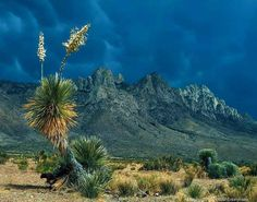 Organ Mountains Las Cruces, New Mexico. Been there and its always great to get back.