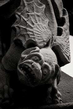 Antipodean gargoyle