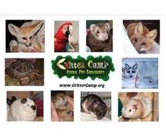 I am helping an important cause called Care for Critter Camp Rescued Pets. Please help me spread the word about this cause and/or make a donation. It means a lot to me!