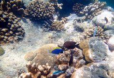 snorkeling zanzibar, chumbe island