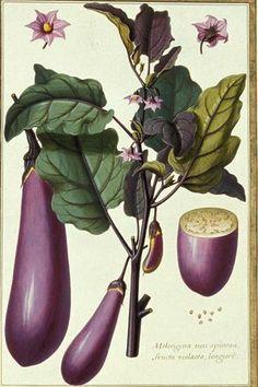 Rhubarb Asparagus Bamboo Kale Vegetable Plant Flower Food ... | 236 x 354 jpeg 21kB