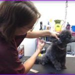 How Does A Groomer Find The Beauty in Matted Shelter Dogs? (Video)  Why does Jennifer Day reserves time in her busy schedule to groom ..  http://www.dogisto.com/how-does-groomer-find-beauty-matted-shelter-dogs-video/